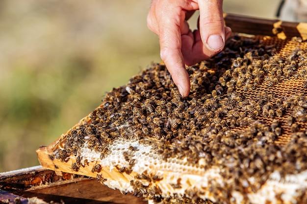 Apiculteur montrant le nid d'abeille dans le cadre. apiculteur au travail. cadres d'une ruche d'abeilles. concept de rucher