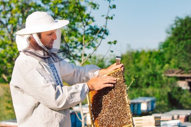 Apiculteur sur rucher.