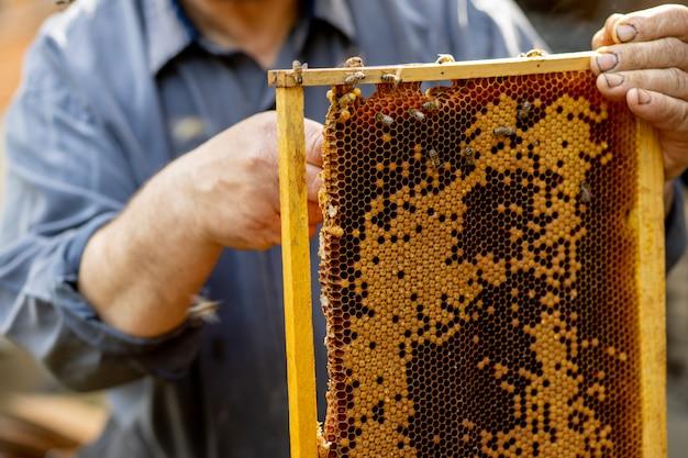 L'apiculteur s'occupe des nids d'abeilles. un apiculteur montre un nid d'abeilles vide. l'apiculteur s'occupe des abeilles et des nids d'abeilles