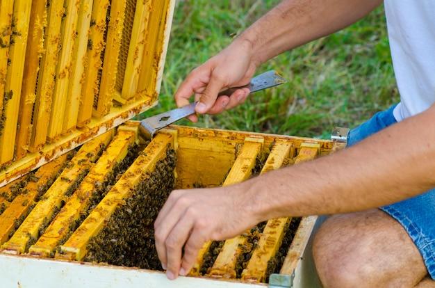 Apiculteur tenant un nid d'abeille plein d'abeilles