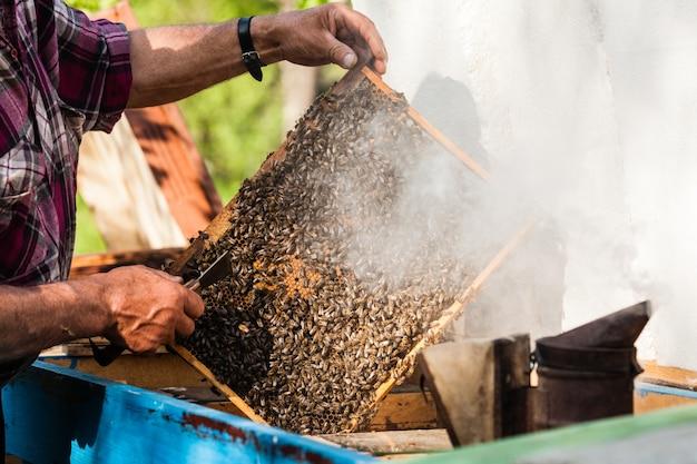 Apiculteur tenant le rayon de miel avec des abeilles