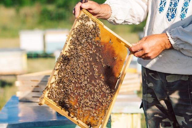 L'apiculteur travaille avec les abeilles et les ruches sur le rucher