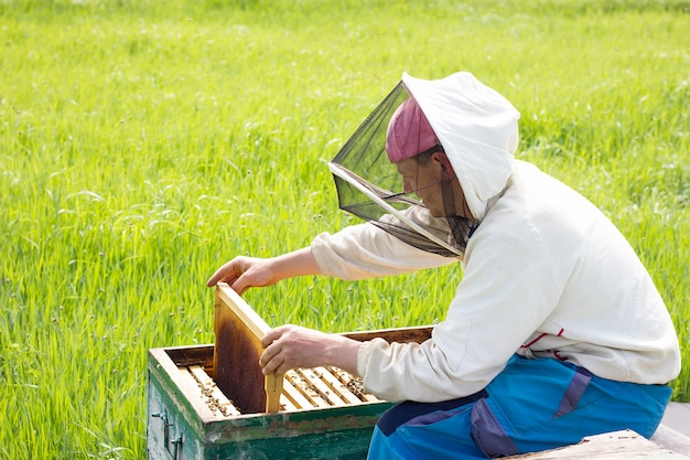 Un apiculteur travaille à la collecte du miel. concept d'apiculture. travail au rucher