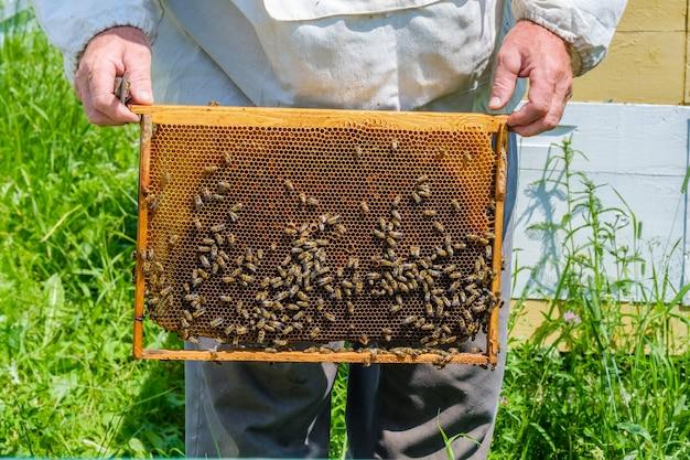 Un apiculteur en vêtements de protection tient un cadre avec des nids d'abeilles