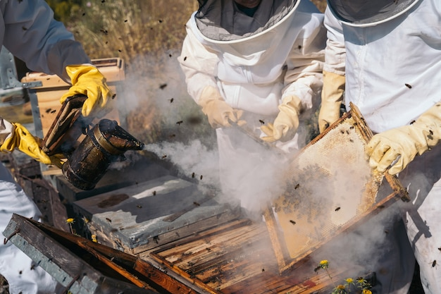 Apiculteurs travaillant à récolter du miel