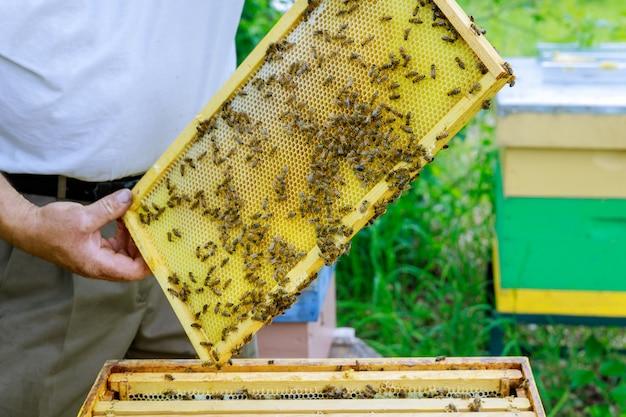 Apiculture apicole apiculteur travaille avec les abeilles près des ruches en sortant des cadres avec des nids d'abeilles pour inspection