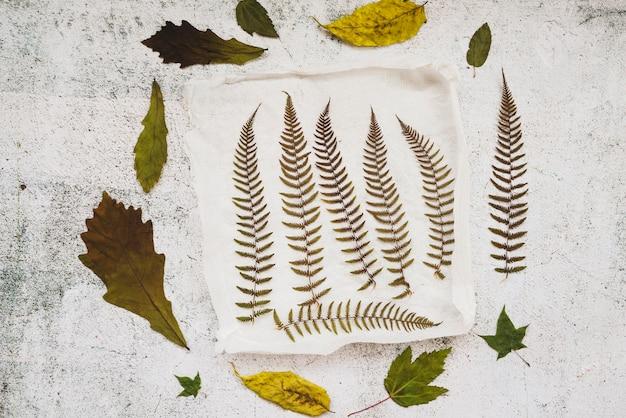 Application avec des feuilles séchées