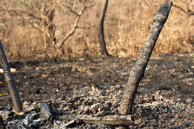 Après un feu de forêt