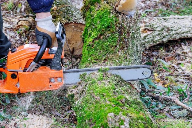 Après un ouragan, des arbres ont été endommagés par des services publics professionnels de la ville coupant un arbre dans la ville