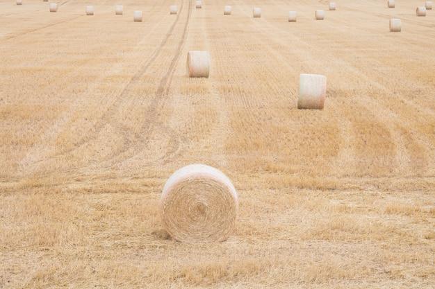 Après la récolte du grain de blé en été balles rondes de paille