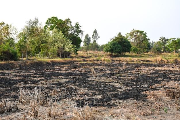 Après la saison de récolte, les agriculteurs brûlent les rizières cause de pm 22 h 25 poussière et pollution