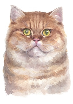 Aquarelle de british shorthair cat