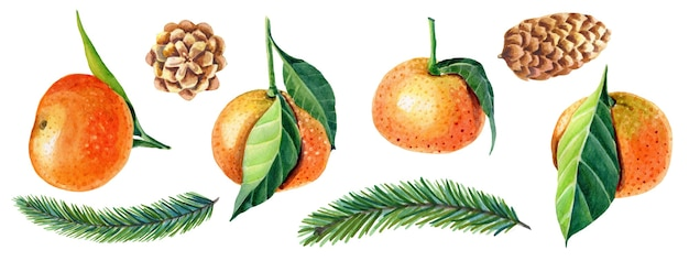 Aquarelle ensemble de mandarines avec feuilles, sapin de noël vert, pomme de pin.
