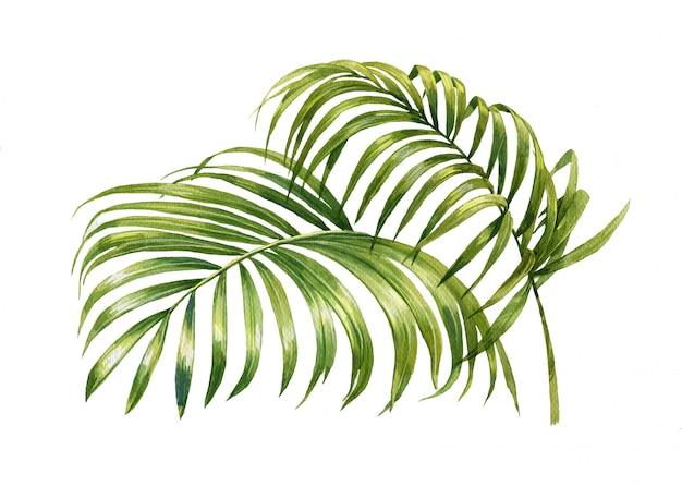 Aquarelle de feuilles de cocotier isolé sur blanc