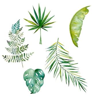 Aquarelle de feuilles tropiques dessinés à la main isolé sur blanc ensemble de feuilles exotiques de monstera de fougère de palmier vert