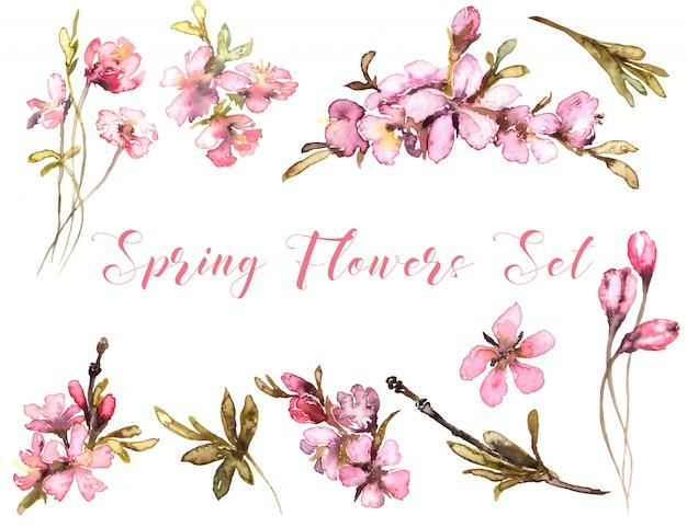 Aquarelle de fleurs de printemps. tendre blush