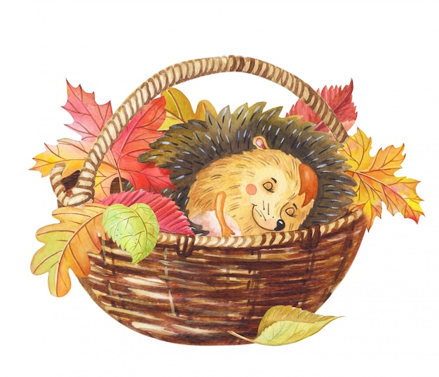 Aquarelle, hérisson, dormir, dans, a, panier, à, coloré, automne, feuilles., aquarelle, dessin animé