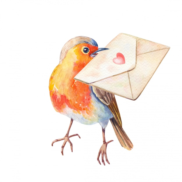 Aquarelle oiseau robin erithacus rubecula. illustration aquarelle dessinée à la main.