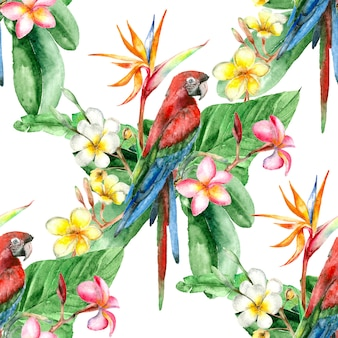 Aquarelle oiseau tropical