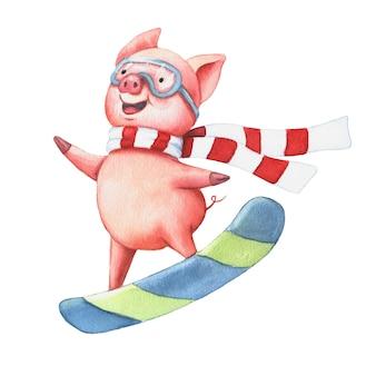 Aquarelle petit cochon sur une planche à roulettes