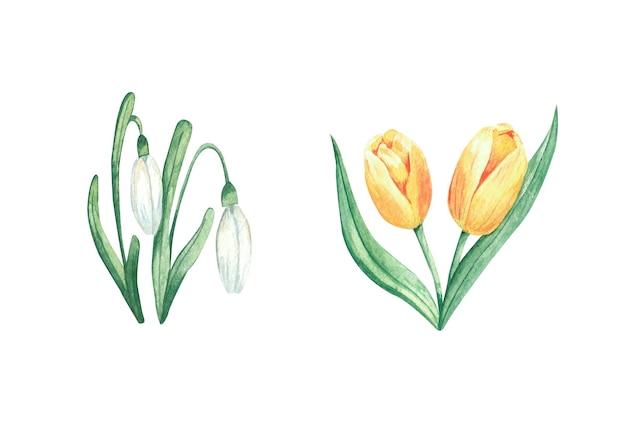 Aquarelle sertie de fleurs de printemps perce-neige blancs et éléments isolés de tulipes jaunes