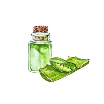 Aquarelle succulente d'aloe vera dans une bouteille