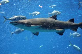 Aquarium d'atlanta