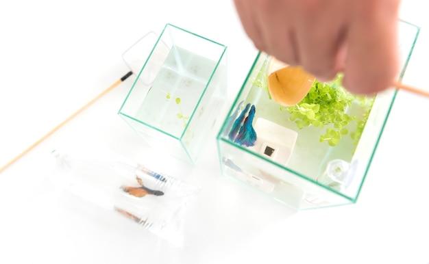 Aquarium pour animal de compagnie et passe-temps à la maison. attraper du poisson dans un nouveau bol. copier l'espace pour le texte