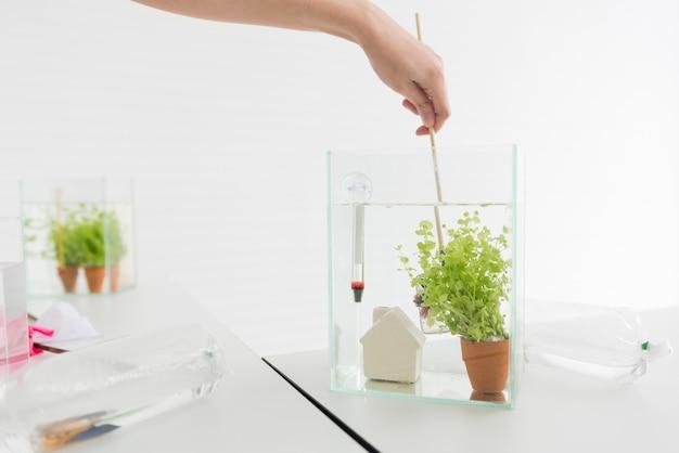 Aquarium pour animal de compagnie et passe-temps à la maison. attraper du poisson dans un nouveau bol.
