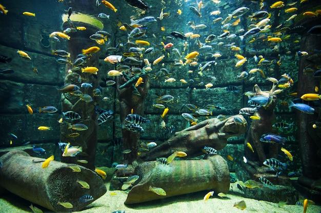 Aquarium sous-marin