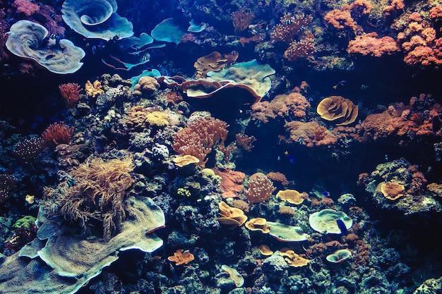 Aquarium tropical avec petits poissons et coraux