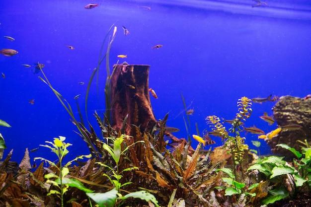 Aquarium, vie aquatique