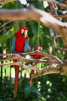 Ara assis sur une branche