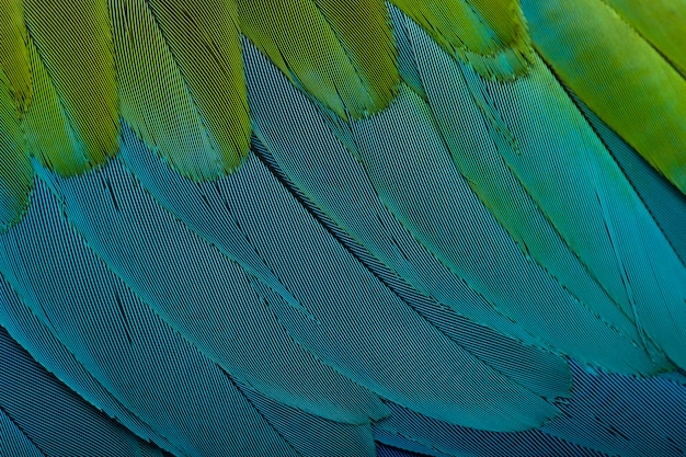 Ara rouge et vert, gros plan sur les plumes
