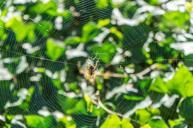 Un arachnide est assis dans sa toile