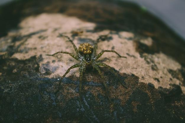 Araignée assise sur bois