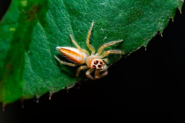 Araignée colorée sur fond de feuille verte