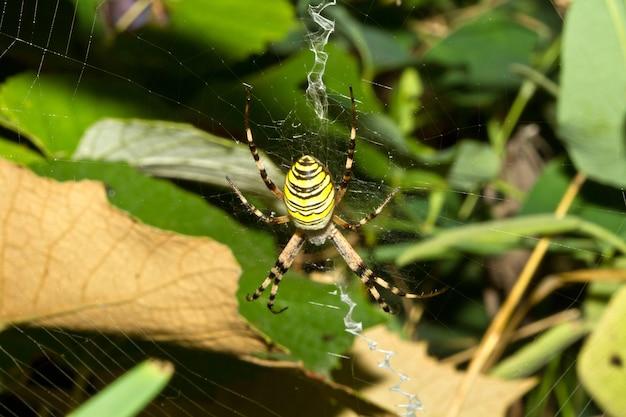 Une araignée dans le filet