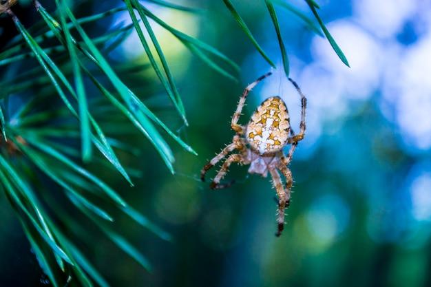 L'araignée des forêts pèse sur la toile