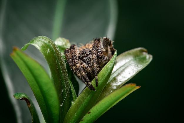 Araignée jaune sur la feuille dans le jardin