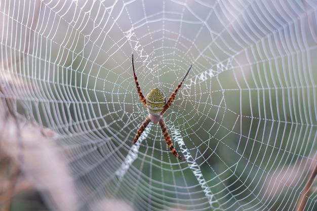 L'araignée monte sur le web.