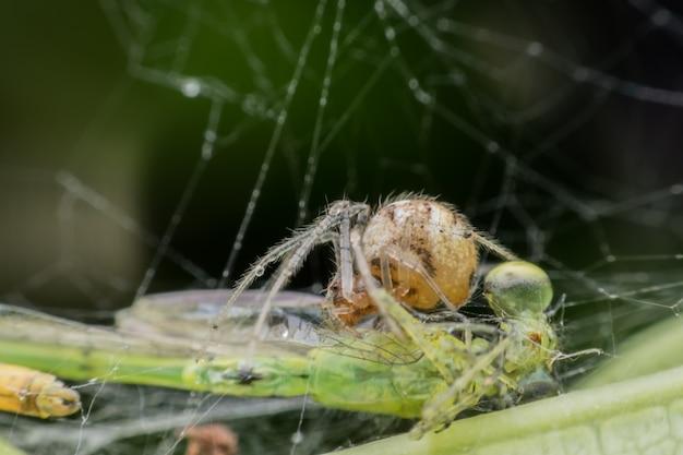 Araignée prise dans son nid en utilisant une toile d'araignée