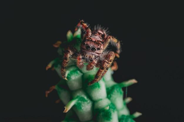 Araignée sauteuse mignonne sur une plante d'intérieur