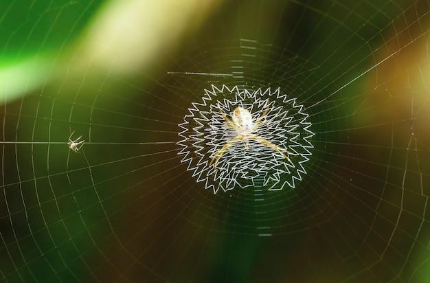 Araignée sur toile d'araignée