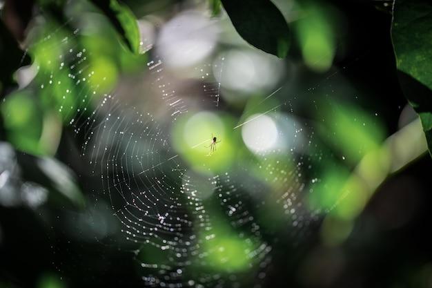 Araignée sur la toile d'araignée