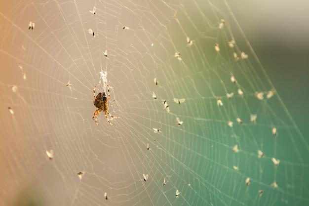 Araignée sur une toile entourée de ses victimes