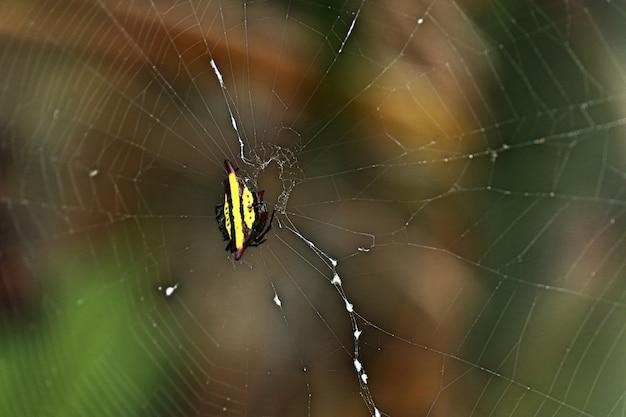 Araignée sur les toiles