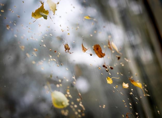 Araignée sur le web avec des feuilles jaunes d'automne