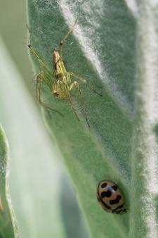 Araignées avec coléoptères