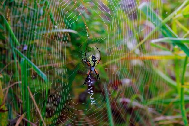 Araignées de jardin araignées araneus de la famille des araignées
